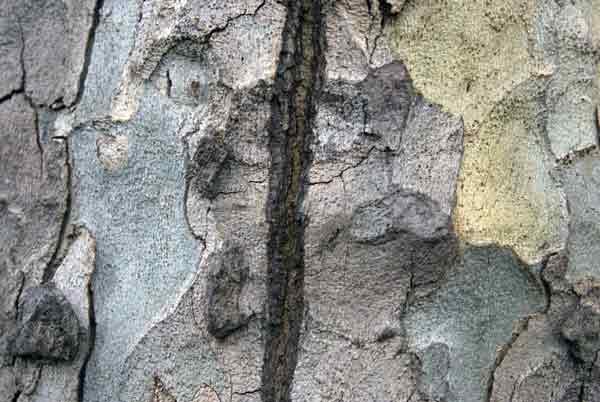 Tree. London 2009
