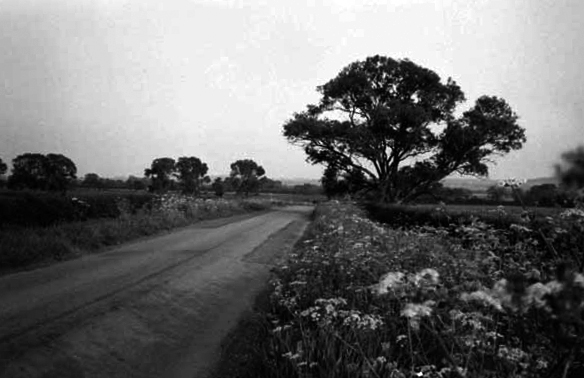 Tree in a field next to a road. UK 1987