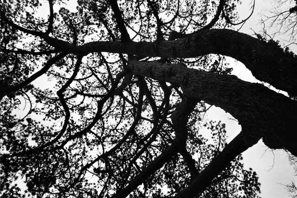 East London trees, 1990's