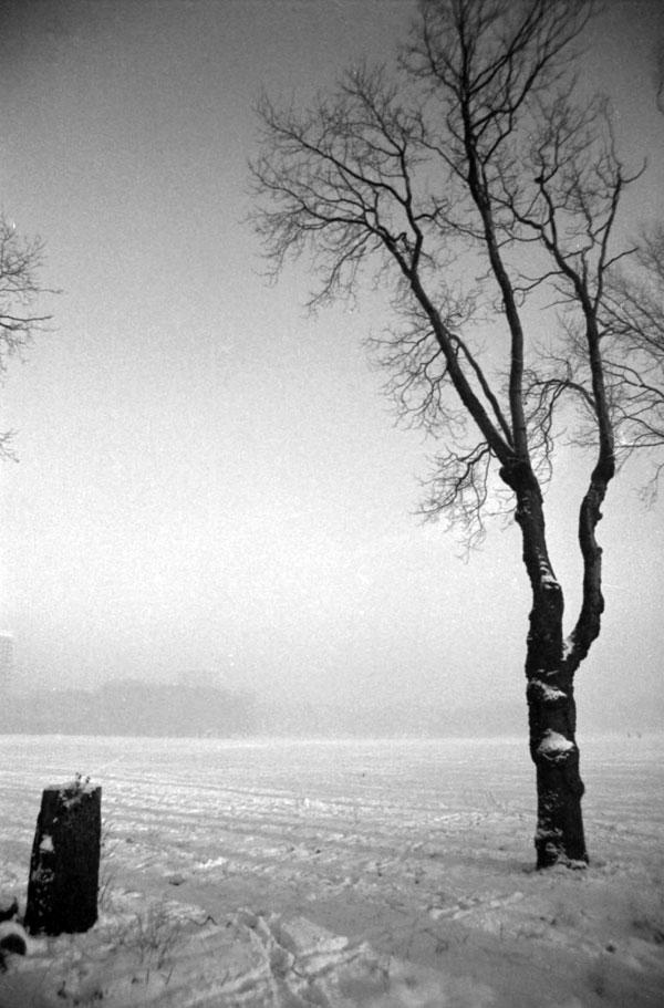 Sefton Park, c.1980
