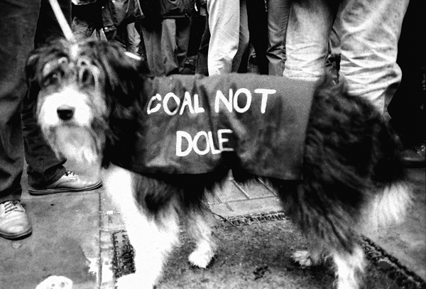 Dog supporting the Miners on strike, 1980's