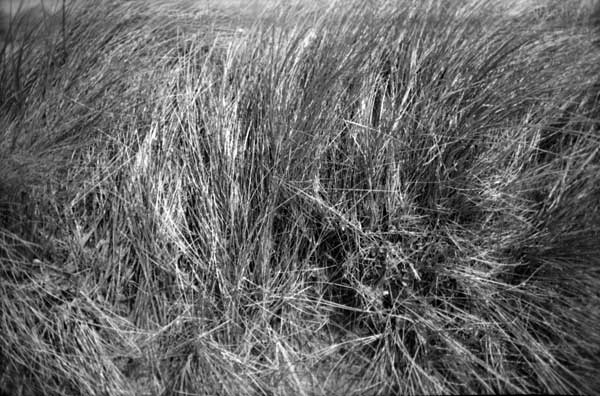 Grass, Kerry Ireland 2002