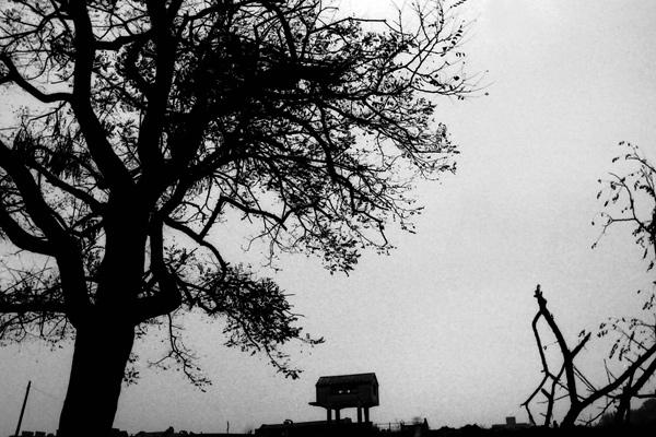 Spitalfields farm c.1984