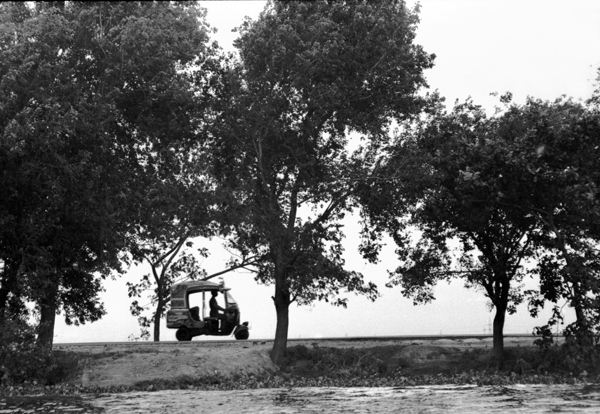 Trees along the river bank, Bangladesh 1994