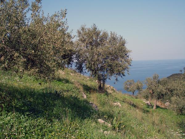 Kyparissi 2009