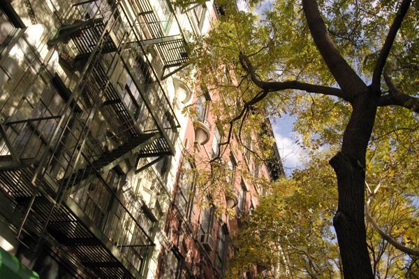 Tree. New York 2005.