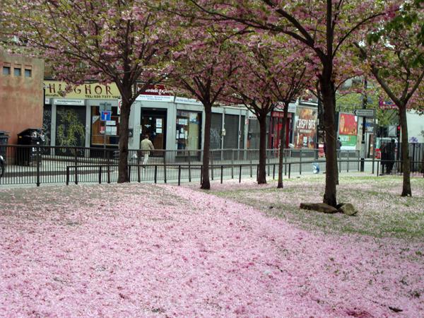 Blossom on Vallance Road. Spitalfields 2010.