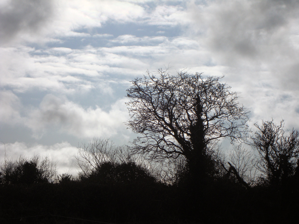 A tree in Kerry. March 2010.