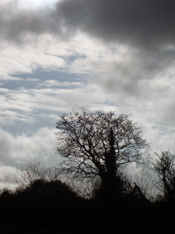 Dark clouds and a tree in Kerry. Ireland 2010.